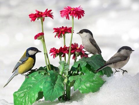 uccelini-fiori-e-neve