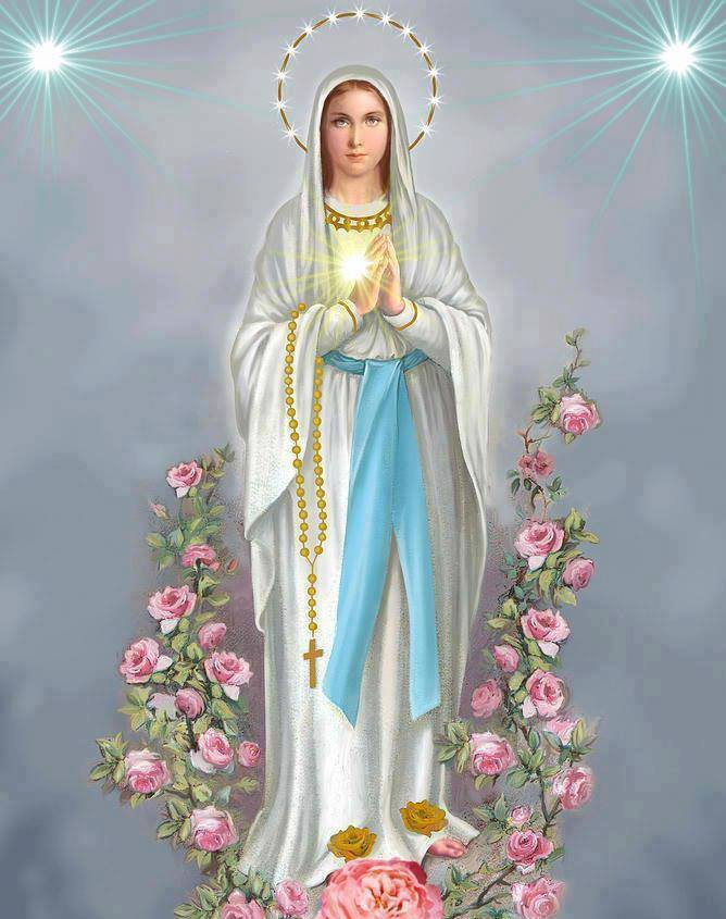MADONNA IMMACOLATE ROSE